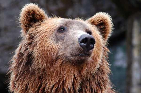 91e6a3dcf2dbd8068d9b9b7e26dc3850 - Bearishe Bitcoin-Analyse von JPMorgan: Droht doch ein neuer Bärenmarkt?