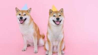"""Bild von Bullish für SHIB: """"Dogecoin-Killer"""" Shiba Inu kommt zu Coinbase Pro"""