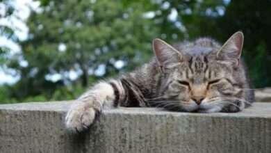 """Bild von """"Stoner Cats NFTs"""": über 300 ETH verloren! """"Fehlgeschlagene Transaktionen"""" verhageln den Start"""