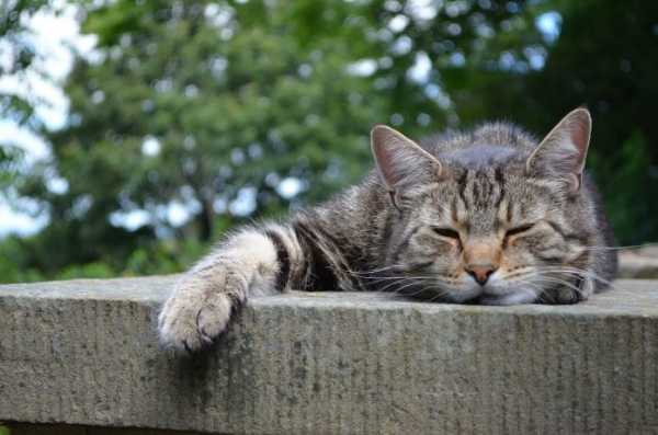"79b5eeac27ca2221722165e0b55aec93 - ""Stoner Cats NFTs"": über 300 ETH verloren! ""Fehlgeschlagene Transaktionen"" verhageln den Start"