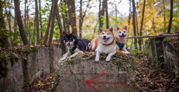 9e35e391abdfcd1d688b578a05a5b5cb - Vitalik Buterin ist Teil der neu gegründeten Dogecoin Foundation